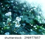 White Raspberry Flowers On Th...