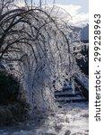 Ice Covered Tree