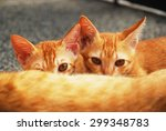 Stock photo two kittens having milk 299348783