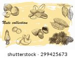 collection of nuts sketch with... | Shutterstock .eps vector #299425673