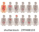 human body anatomy  vector... | Shutterstock .eps vector #299488103