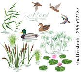 Set Of Wetland Plants And Bird...