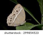 macro image of  a bush brown... | Shutterstock . vector #299854523