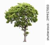 Tree Isolate - Fine Art prints