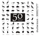 Vector Set Of Very Detailed...