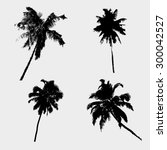 various tropical palm tree... | Shutterstock .eps vector #300042527