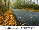Northern Poland.  Autumn Road.