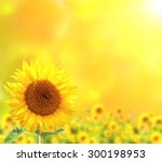 Bright Sunflowers On Yellow...