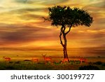 impala at african sunset...   Shutterstock . vector #300199727