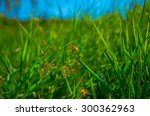yellow wildflowers on a