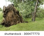 Storm Damaged Tree Uprooted An...