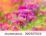 Beautiful Pink Flowers On The...