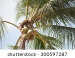Monkey Work Coconut