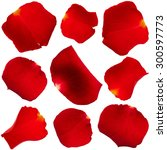 Stock photo set of red rose petals isolated on white background 300597773