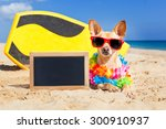 chihuahua dog  at the beach... | Shutterstock . vector #300910937