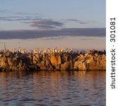 flock of birds on lake  lake of ...   Shutterstock . vector #301081