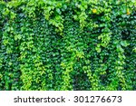 green leaves wall background | Shutterstock . vector #301276673