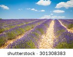 fields of lavender in provence  ... | Shutterstock . vector #301308383