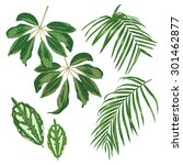 set of tropical leaves isolated ... | Shutterstock .eps vector #301462877