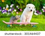 Stock photo white swiss shepherd s puppy and tabby kitten on skate 301464437