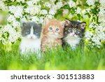 three little kittens sitting... | Shutterstock . vector #301513883