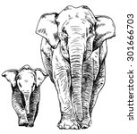 hand drawn sketch of elephant... | Shutterstock .eps vector #301666703