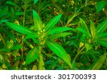 green flower leaves in the... | Shutterstock . vector #301700393