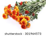 Orange Chrysanthemum On White...