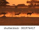 Blesbok Antelope   African...
