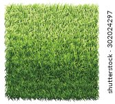 square of green grass. a lawn... | Shutterstock .eps vector #302024297