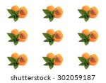 mint  apricot cut in half on... | Shutterstock . vector #302059187