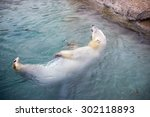 Polar Bear Swimming   Taken On...
