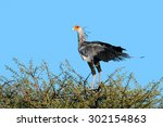 A Secretary Bird  Sagittarius...