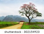 red silk cotton tree   the... | Shutterstock . vector #302154923