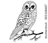 the image of an owl on a branch ... | Shutterstock .eps vector #302168687
