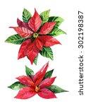christmas poinsettia  isolated... | Shutterstock . vector #302198387
