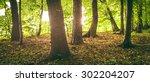 trunks of trees in the morning... | Shutterstock . vector #302204207