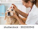 Veterinary Placing A Few Drops...