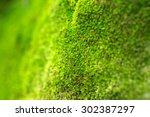 Moss On A Tree Background.moss...