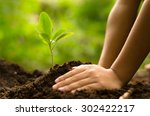 close up kid hand planting... | Shutterstock . vector #302422217