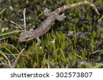 macro image of a gecko on mossy ... | Shutterstock . vector #302573807