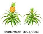 pineapple   Shutterstock .eps vector #302573903