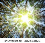 Pine Green Forest Background I...