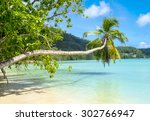 palm tree on a beautiful... | Shutterstock . vector #302766947