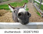 Cute Donkey On The Farm  Cute...