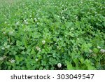 Small photo of Alpine clover