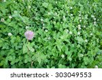 Small photo of Alpine clover with one single blossom