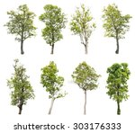 collection of isolated tree on... | Shutterstock . vector #303176333