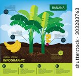 Banana  Infographics. Fruits...