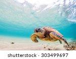 A Hawaiian Green Sea Turtle...